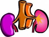 reni stilizzati